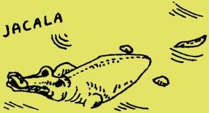Ik ben Jacala, de krokodil