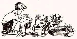 Weet jij hoe je planten moet verzorgen?
